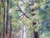 Nyári erdő