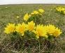 Tavaszi hérics