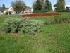Tulipán téri kert